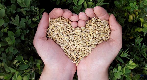 Cereali integrali toccasana per la salute anche contro i tumori