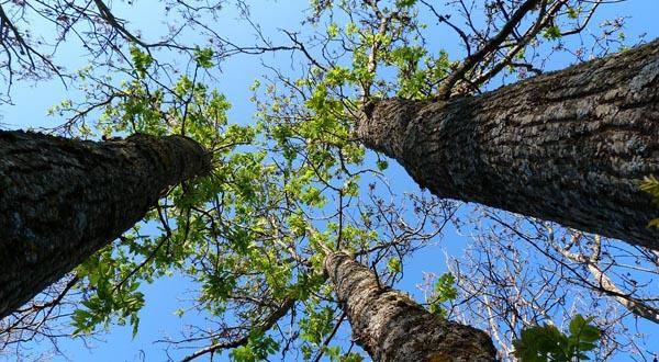 Via XX Settembre e quei 25 alberi abbattuti in fretta
