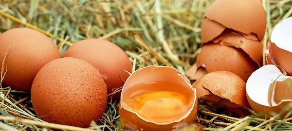 diminuzione uova